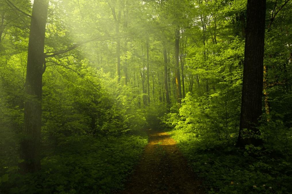 Taoísmo y vivir de acuerdo a la naturaleza